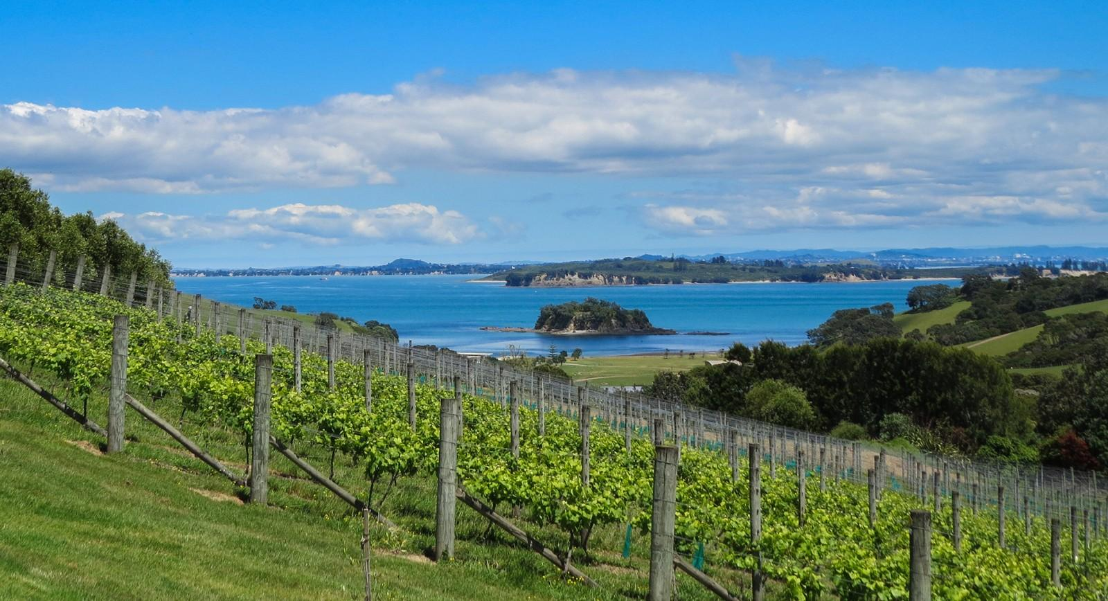 Cable Bay Vines & views