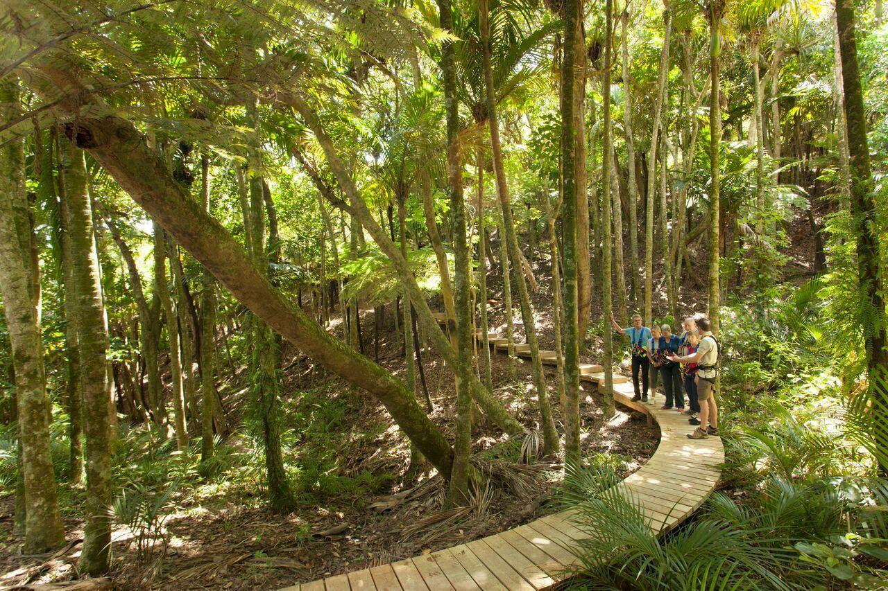 Zipline Waiheke Ecozip Adventures Waiheke Island Heletranz