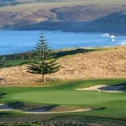 Kauri Cliffs golf pine copy