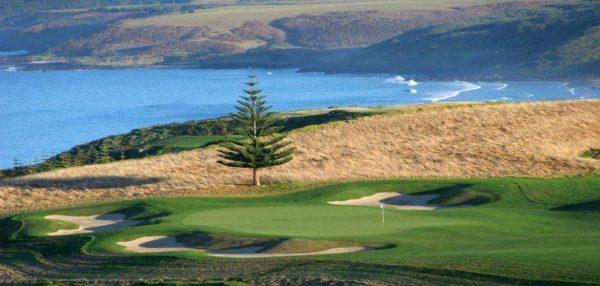 Kauri Cliffs golf pine