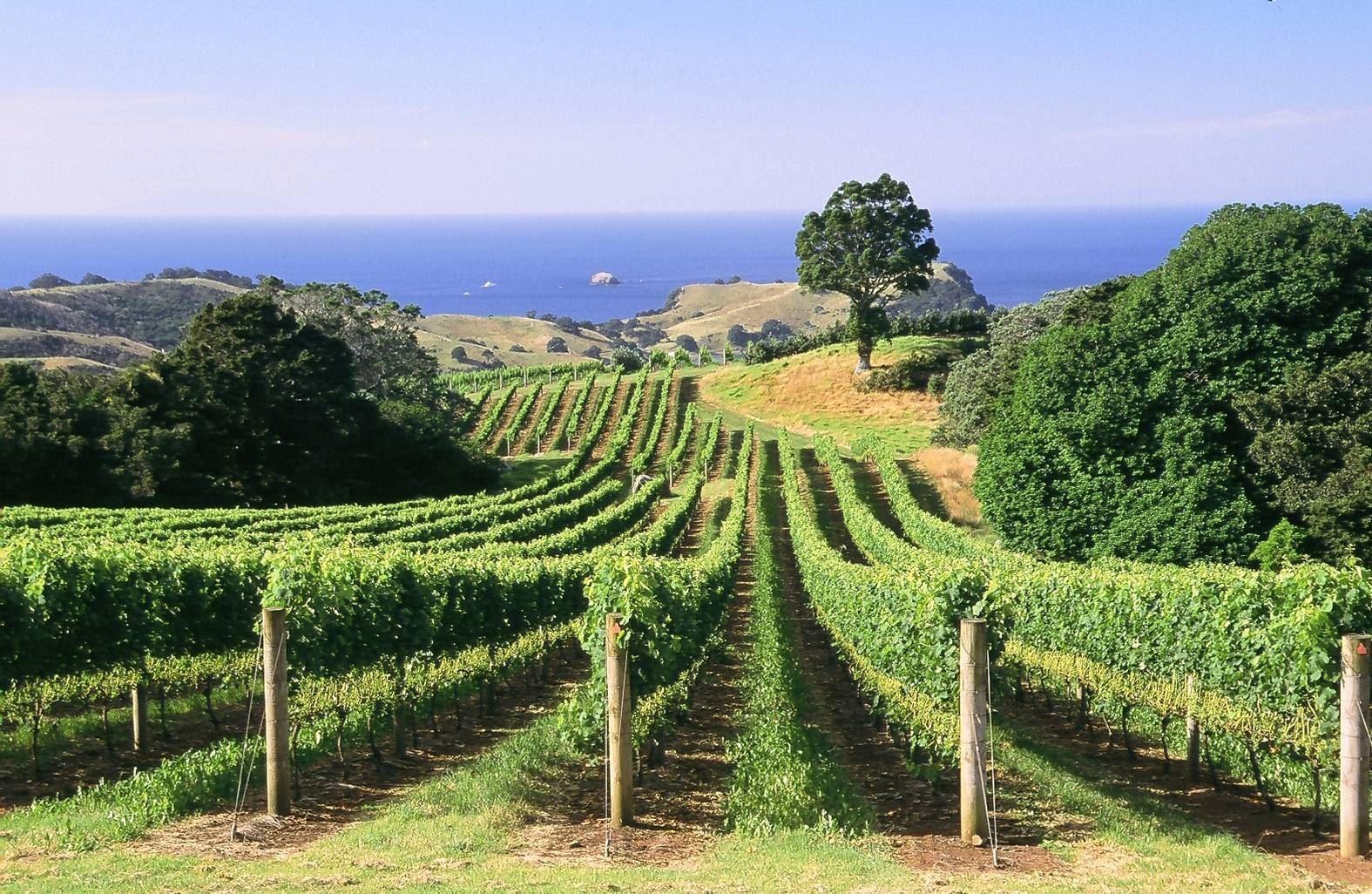 Man O War vineyards