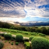 Poderi Crisci vines and sky