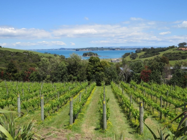 Cable Bay Chardonnay view