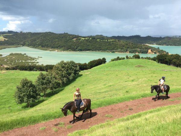 Exploring Te Matuku Bay Waiheke on horseback