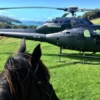 Heletranz helicopter and horse head at Waiheke Horse Tours
