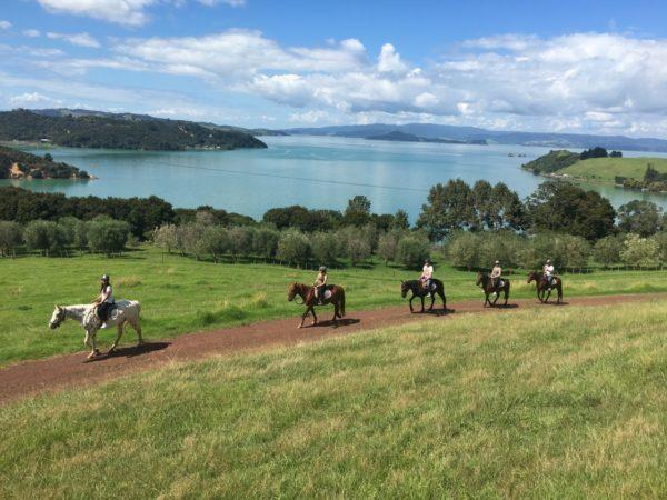 panoramic view of horse trek with Te Matuku Bay in the background at Waiheke