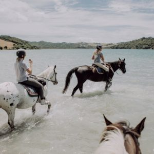 Horses riding knee-deep in water at Waiheke