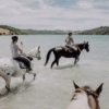 Horses riding knee-deep in water at Waiheke