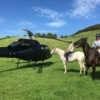 Helicopter & Horses